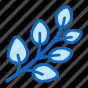 eucalyptus, herb, medicinal, plant icon