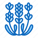 flower, herb, lavender, medicinal, plant icon