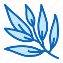 herb, medicinal, plant, willow icon
