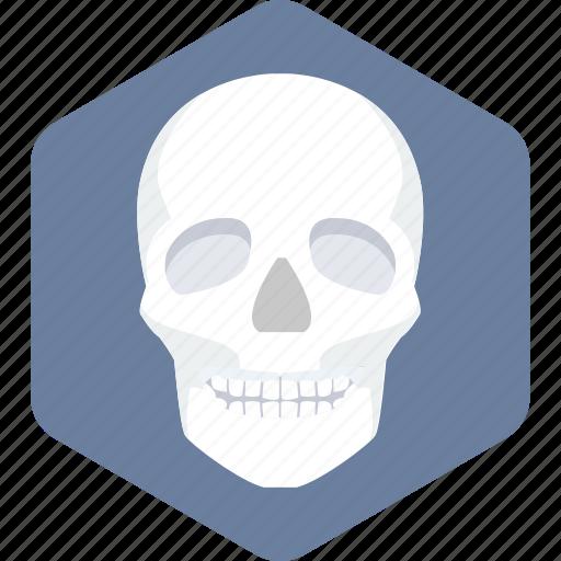 bones, face, skeleton icon