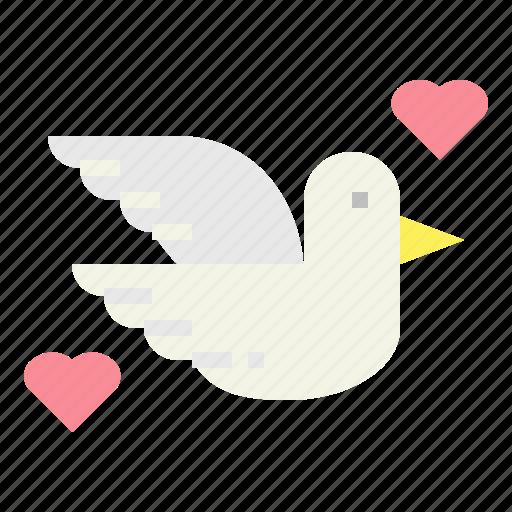 bird, dove, peace, pigeon icon