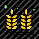 farm, food, india, wheat