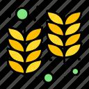 farm, holi, india, wheat