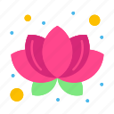 lotus, nature, plant