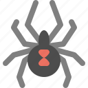 animal, insect, spider, web icon