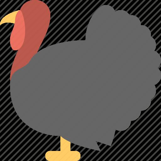 bird, meat, turkey icon