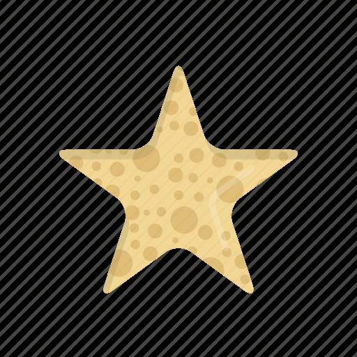 animal, beach, ocean, sea, seastar, star, starfish icon