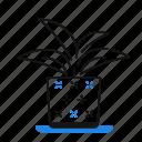 decoration, foliage, houseplant, indoor, plant, pot