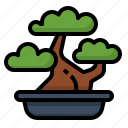 bonsai, decor, green, home, plant, tree