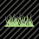 decoration, garden, grass, nature, plant, home decoration