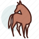 animal, domestic, equestrianism, horse, pose8, ride icon