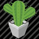 cactus plant, decoration piece, decorative urn, hotel decoction, plant pot, plant vase icon