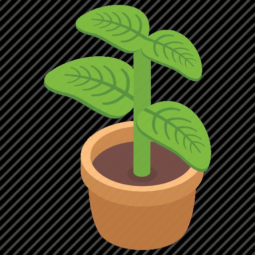decoration piece, decorative plant, decorative urn, hotel decoction, plant pot, plant vase icon
