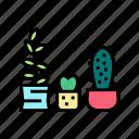 cactus, house, plant, houseplant, store, sale