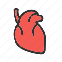 blood, body, heart, human, medical, muscle, organ icon