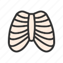 body, health, human, ribcage, shape, system