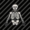 anatomy, body, human, medical, skeleton, skull