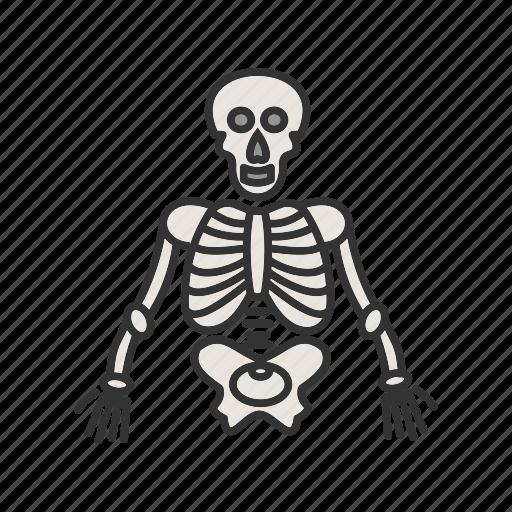 anatomy, body, human, medical, skeleton, skull icon