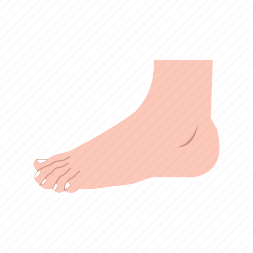 body, feet, fingers, foot, health, nails, toe icon
