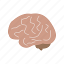 body, brain, cerebellum, head, human, mind, organ icon