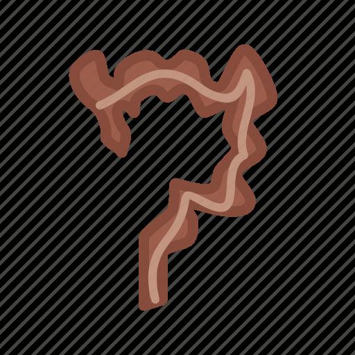 body, health, intestine, intestines, rectum, small icon