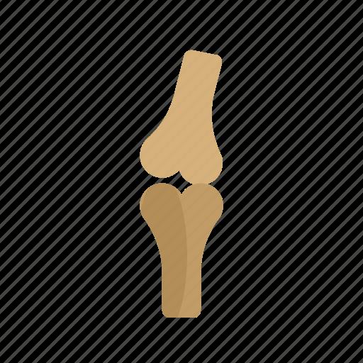 arthritis, bones, health, human, joint, knee, pain icon