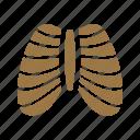 body, ribcage, system, shape, health, human icon