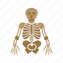 body, skeleton, skull, medical, anatomy, human icon