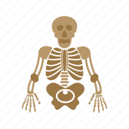 anatomy, body, human, medical, skeleton, skull icon