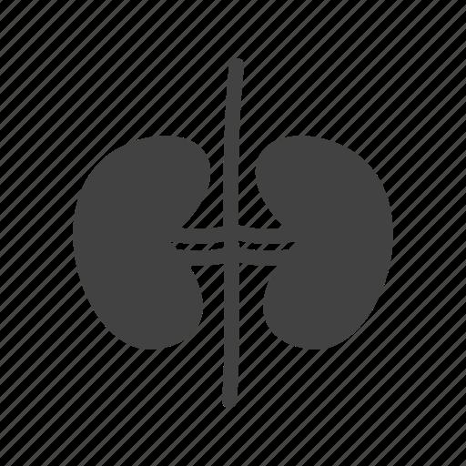 anatomy, body, healthy, human, kidney, renal, urine icon