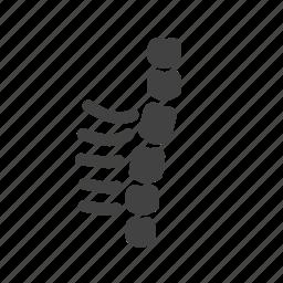 back, body, bone, human, spine, surgery icon