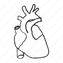 cardic, heart, human icon