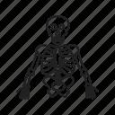 body, skeleton, skull, medical, anatomy, human