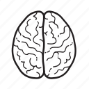 anatomy, brain, gyrus, medicine, organ icon