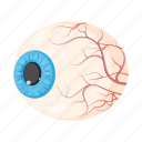 anatomy, eye, eyeball, human, internal, medicine, organ icon