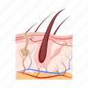 anatomy, hair, human, internal, medicine, organ, skin icon