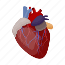 anatomy, heart, human, internal, medicine, organ icon