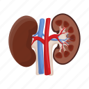 anatomy, human, internal, kidneys, medicine, organ icon