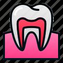 biologyhealth, human, organ, tooth