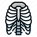 biologyhealth, human, organ, ribs icon