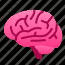biology, brain, health, human, idea, organ, think