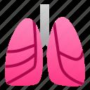 biology, human, lungs, organ
