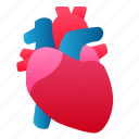 biology, heart, human, organ