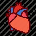 heart, human, life, organ