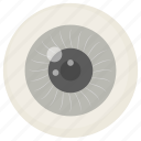 eyeball, cornea, optic, nerve, eye, vision, body part