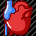 anatomy, artery, blood, heart, human, organ icon