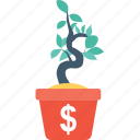 dollar, growth, money, money plant, plant