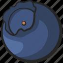 blueberry, fruit, icon, illustration, vector icon