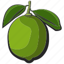 fruit, icon, illustration, lime, vector icon