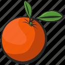 fruit, icon, illustration, orange, vector icon